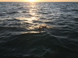 Eleventh-hour reprieve clears the way for Channel charity swim